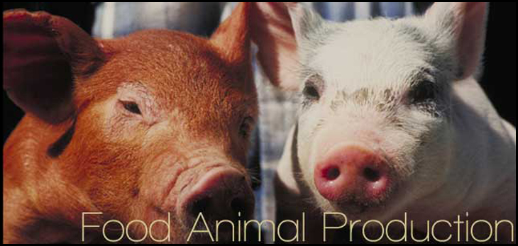 Food Animal Production