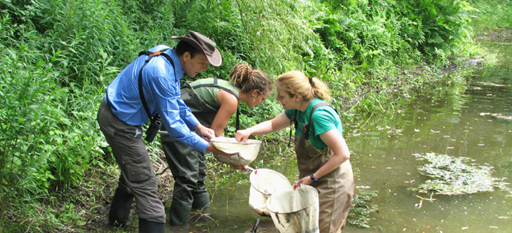 Biology students and professors doing research in a pond.