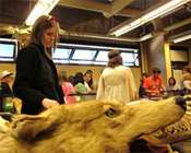 Students looking at wolf skins and animal skeletons