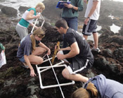 Students on the coast conducting research