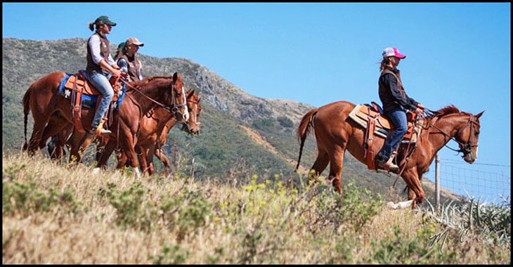 Cal Poly Performance Quarter Horses