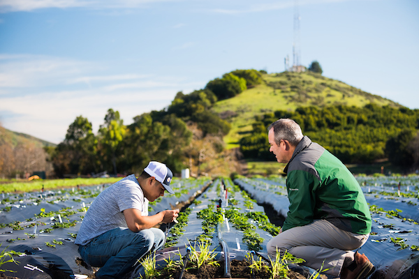 student and professor in planted field
