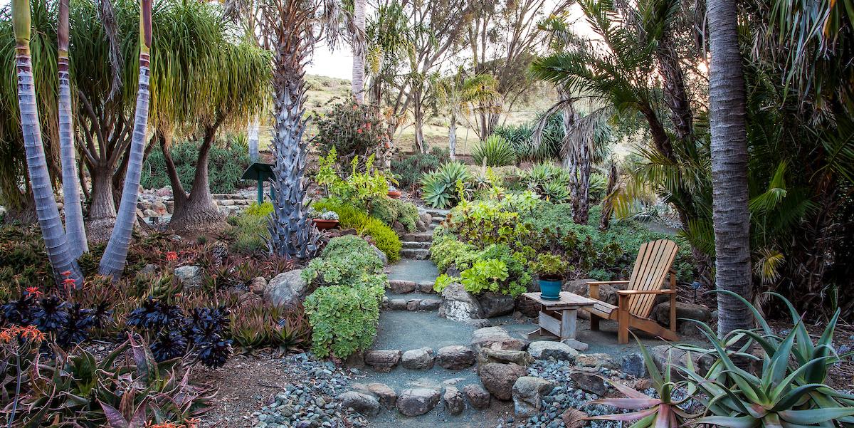 Palm and Aloe Garden