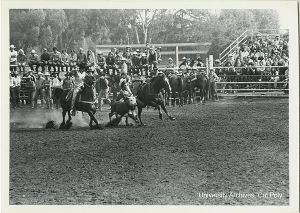Historical Photos Cal Poly Rodeo Cal Poly San Luis Obispo