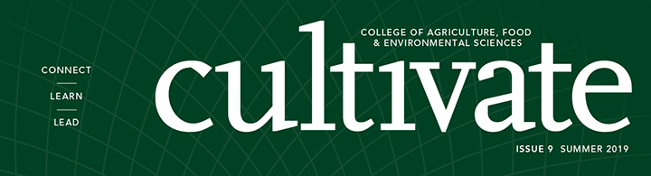 Cultivate Magazine cover title