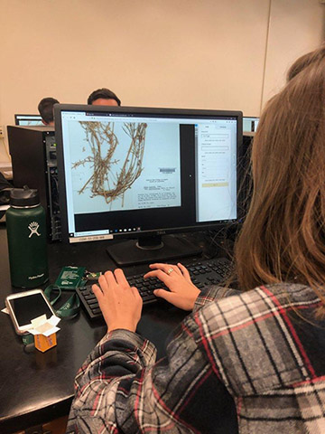 A student transcribing information from a herbarium specimen as part of a global event.
