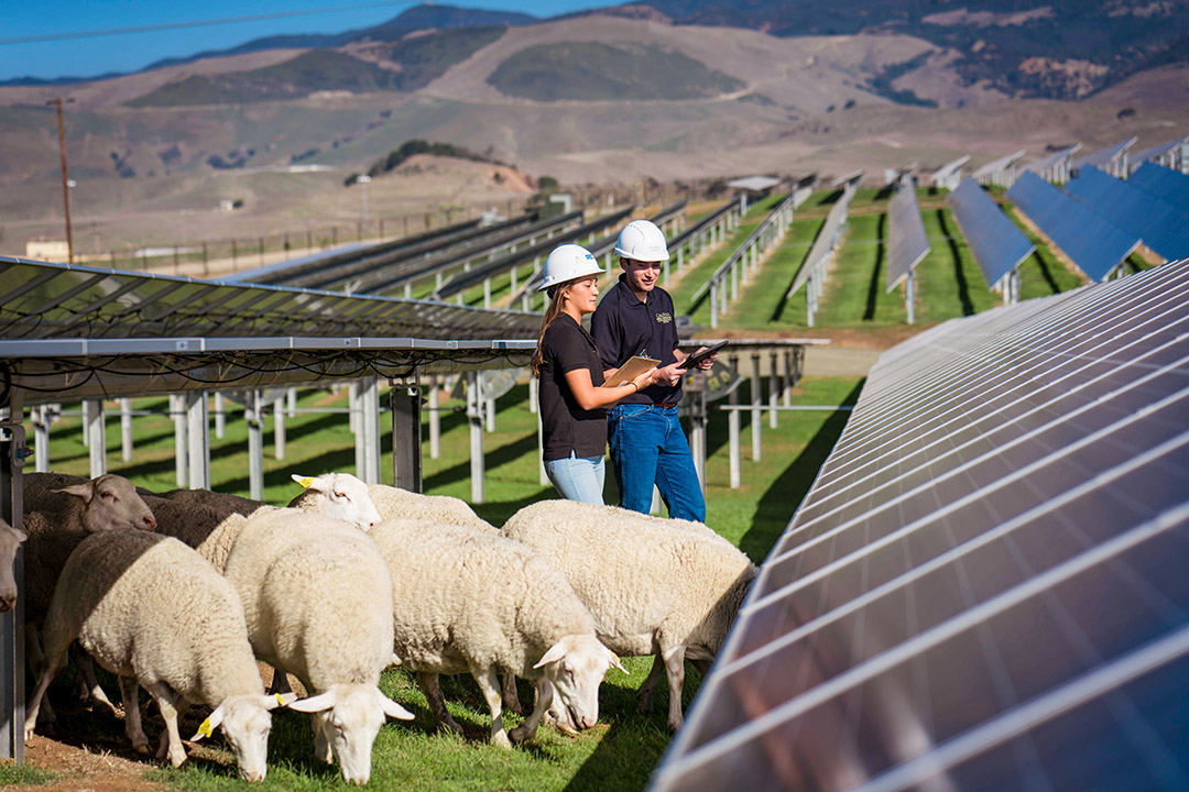 Photo of Cal Poly's solar farm.