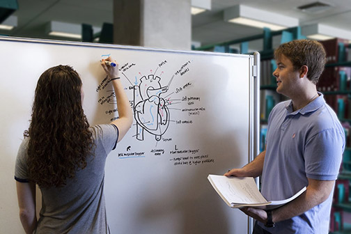 Photo of two people labeling a drawing of a heart on a whiteboard