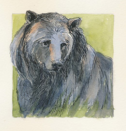 A sketch of a bear.