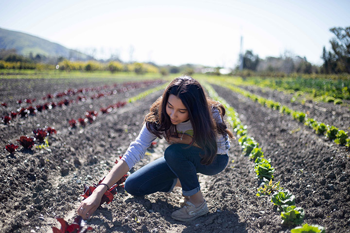 A woman kneels next to a row of plants on Cal Poly's organic farm