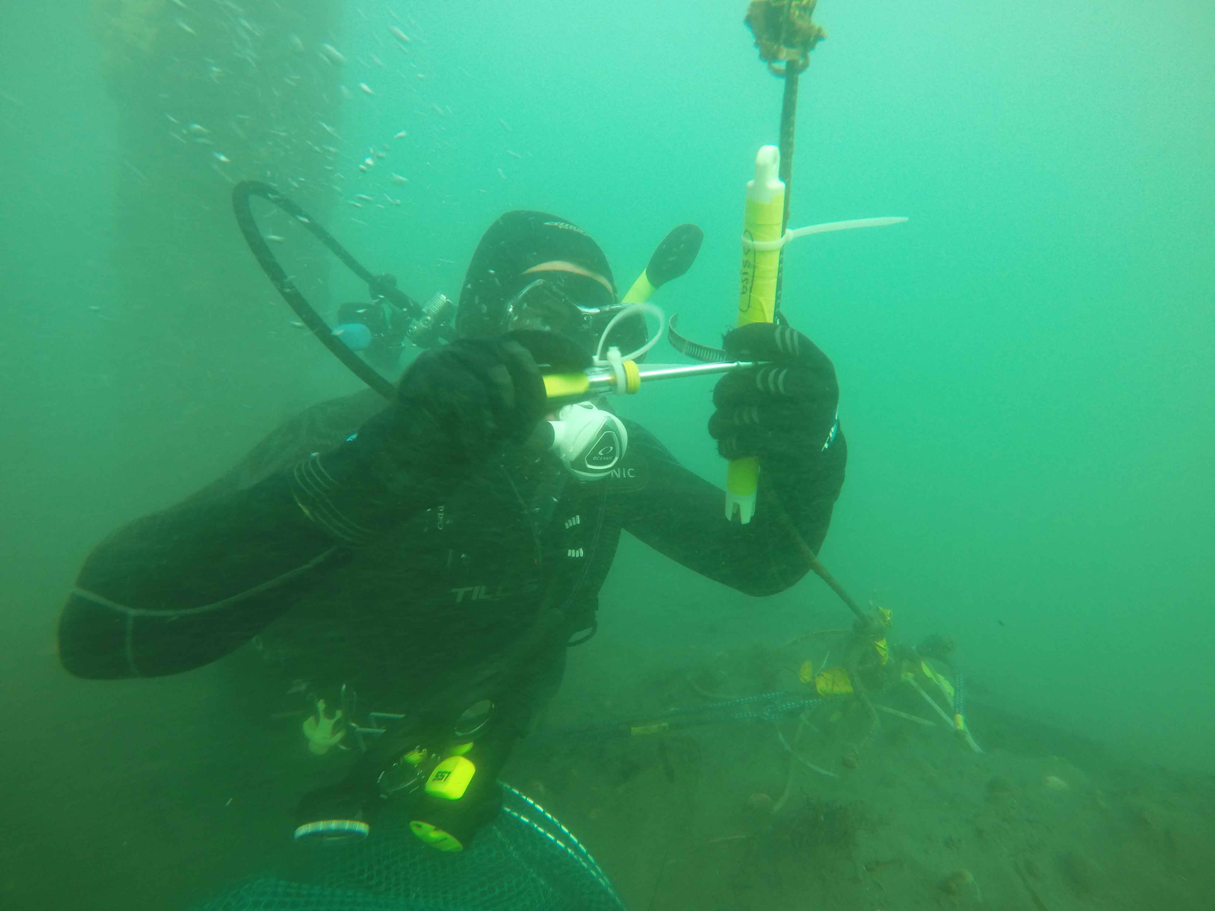Cal Poly mechanical engineering student Edwin Rainville, adjusts a thermistor — an instrument that measures temperature — underwater in Morro Bay.