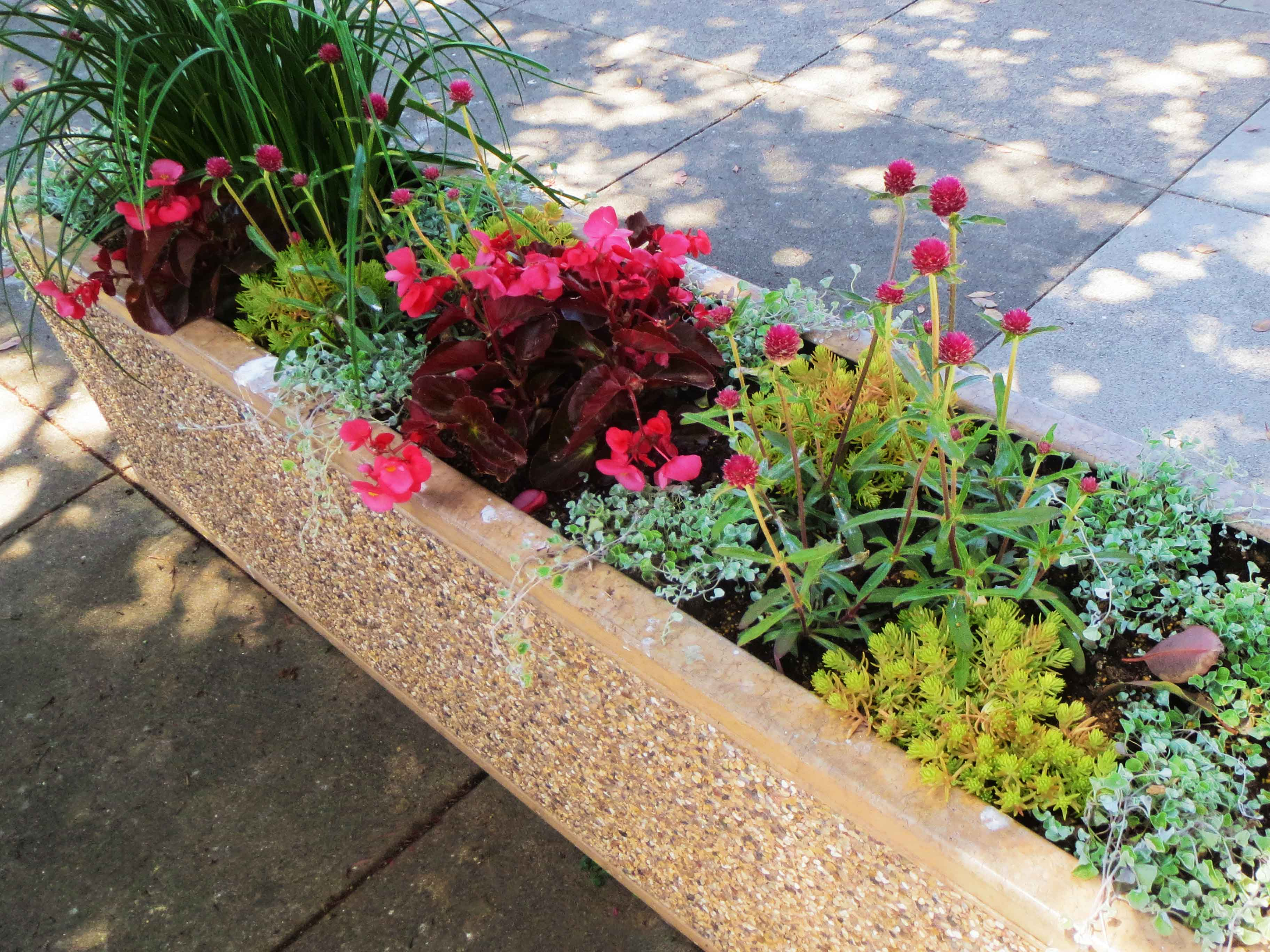 A planter box in downtown Morro Bay.