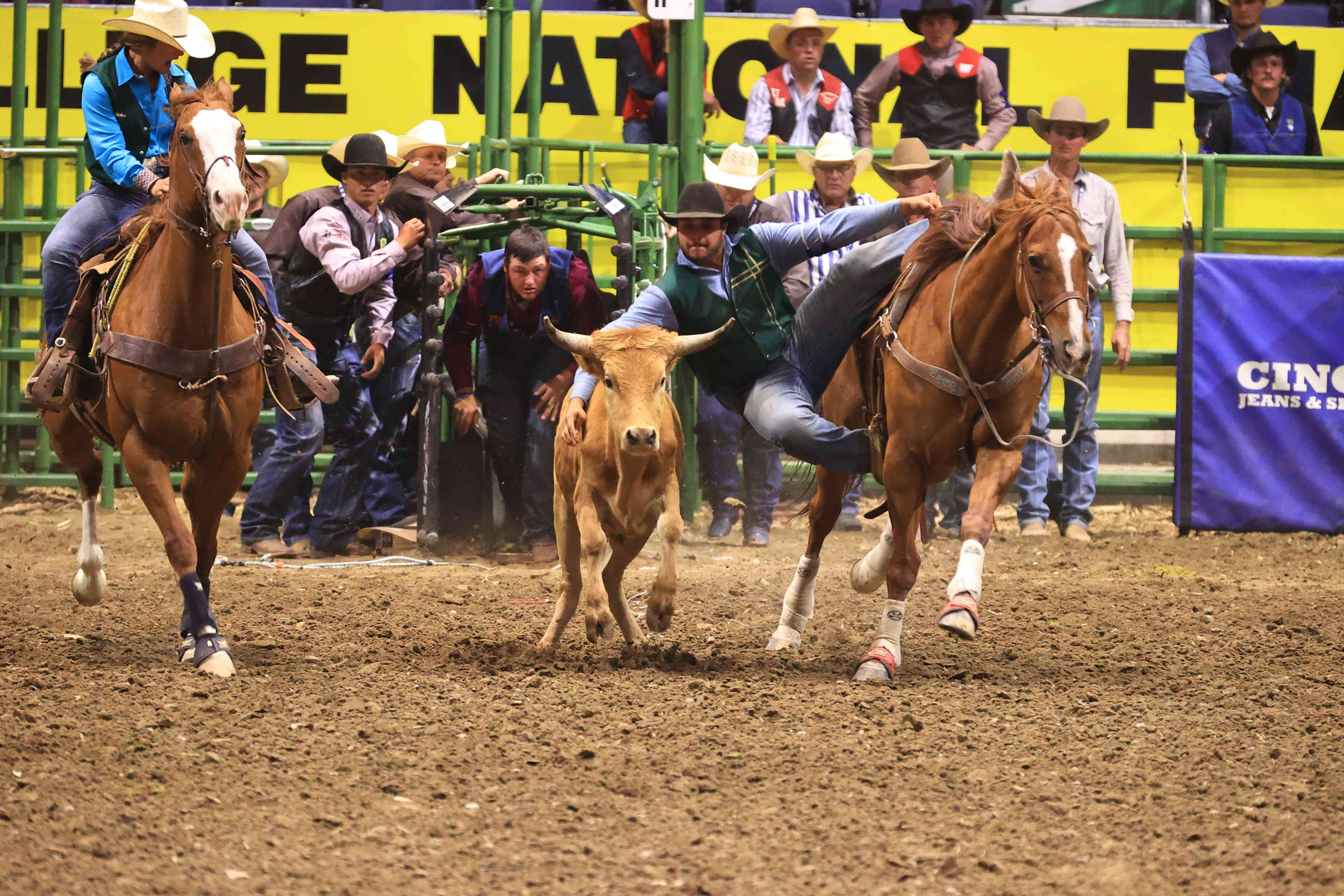 Grant Peterson, a second-year agricultural systems management major, competes in the steer wrestling event at the College National Finals Rodeo in Casper, Wyoming.