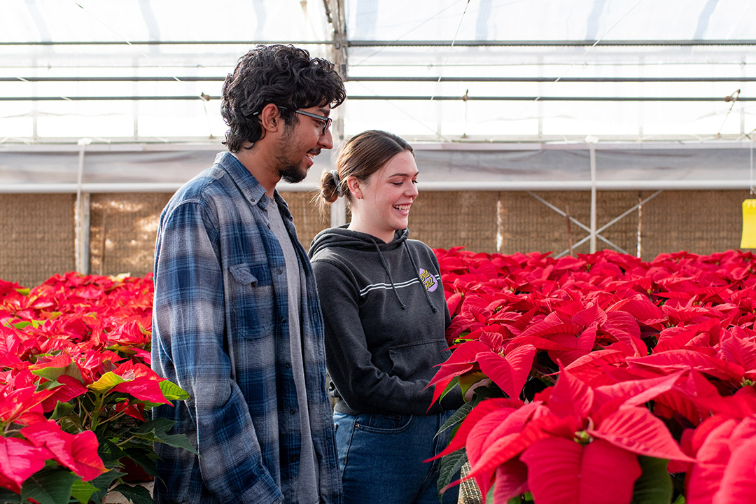 Senior Justin Williams and junior Beth Funke working the greenhouse with this year's poinsettias