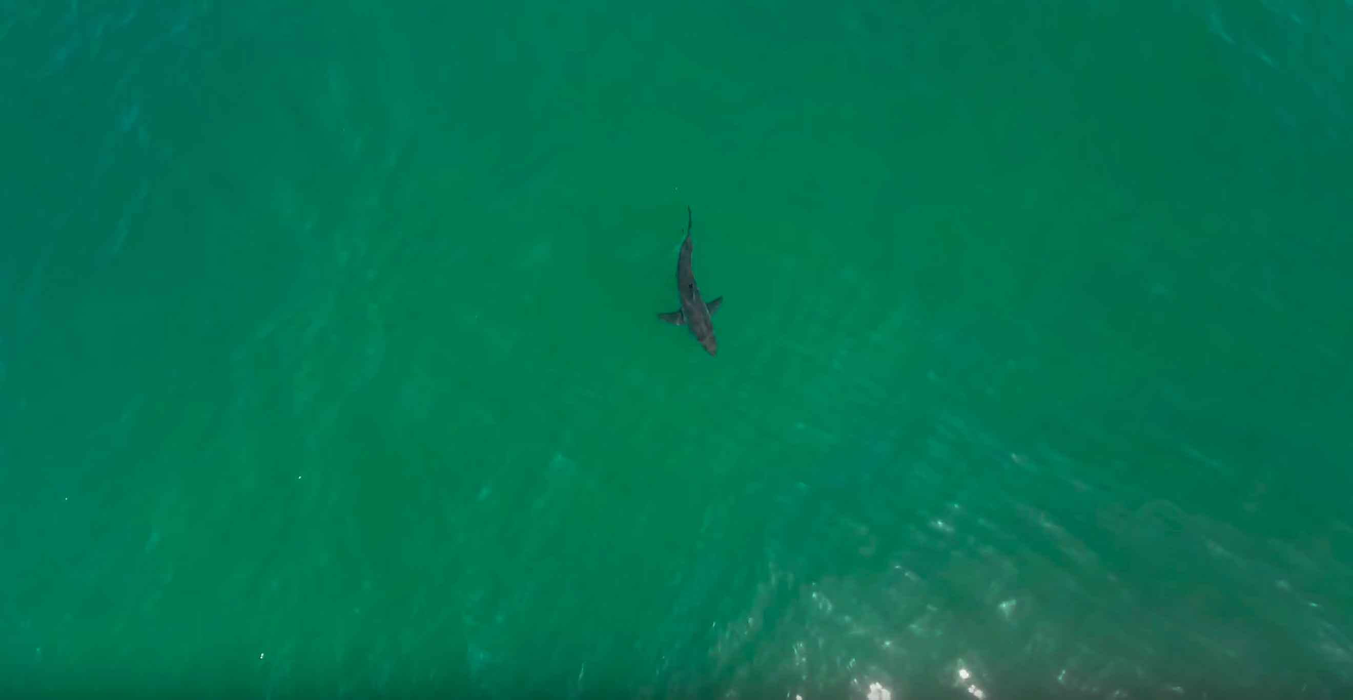 Images collected from drones between Santa Barbara and San Diego show sharks and surfers.