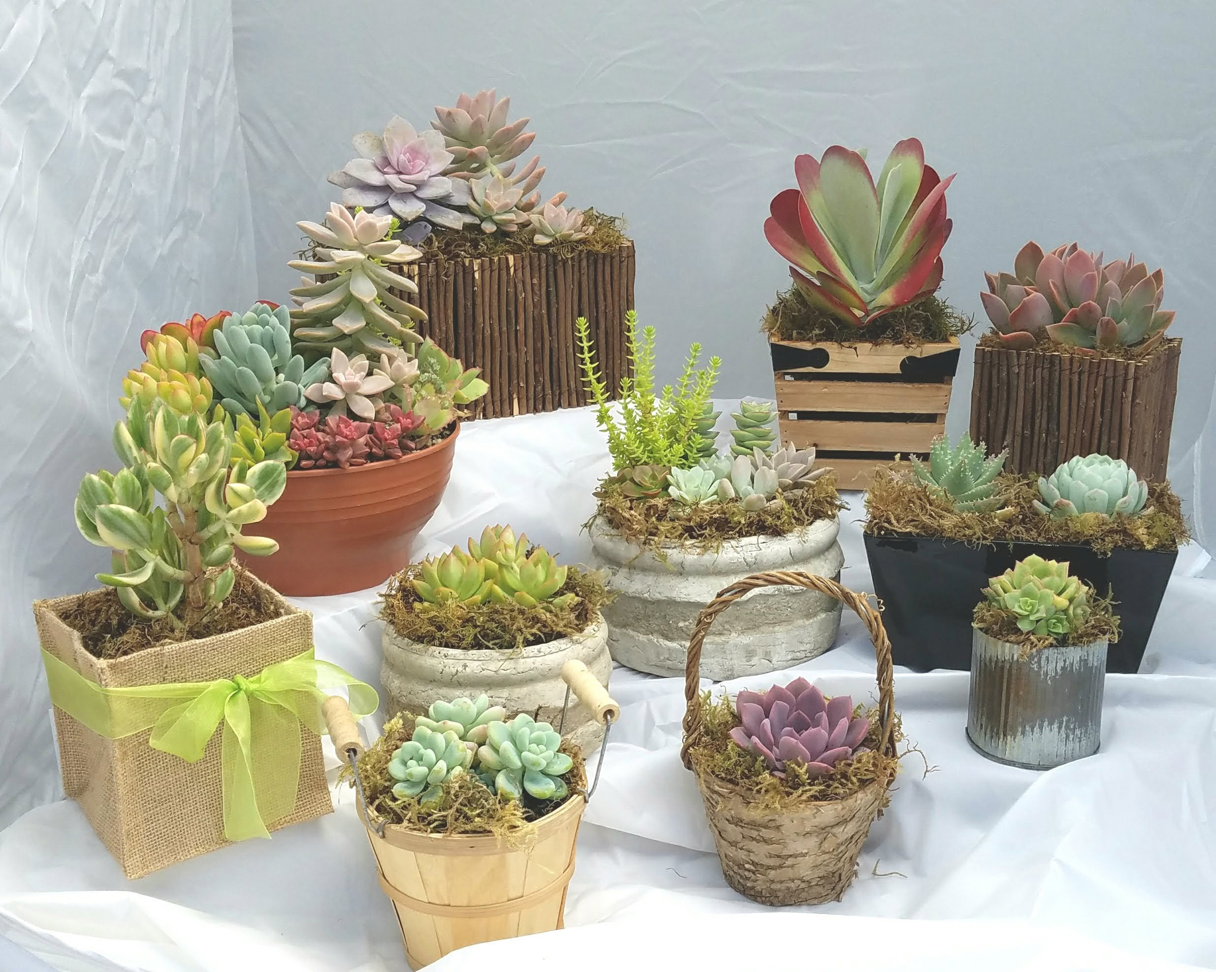 Succulent baskets on display