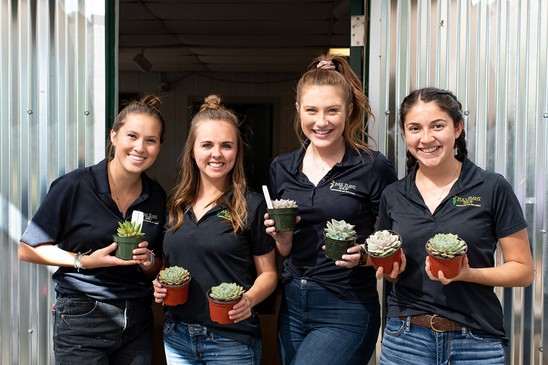 Members of the succulent enterprise have worked for months propagating succulents for this weekend's sale. The student team manages every aspect of the event, from greenhouse management to promotion and sales.