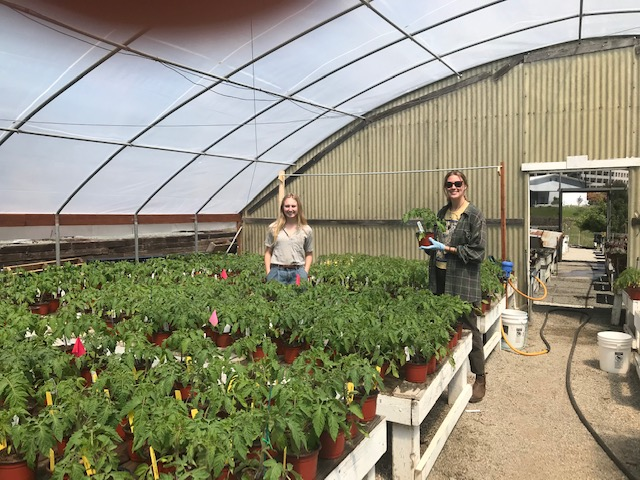 Two Cal Poly students pose with tomato plants