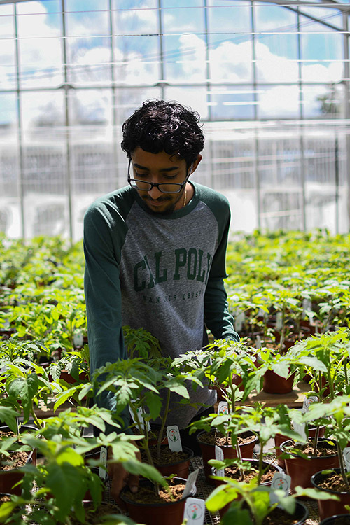Justin Williams, a senior agricultural and environmental plant sciences major and head grower for the project, working in the greenhouse.