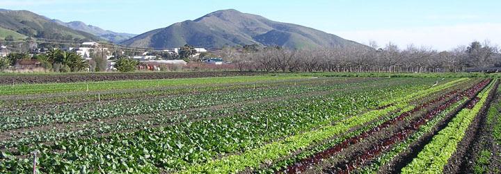 Cal Poly Organic Farm