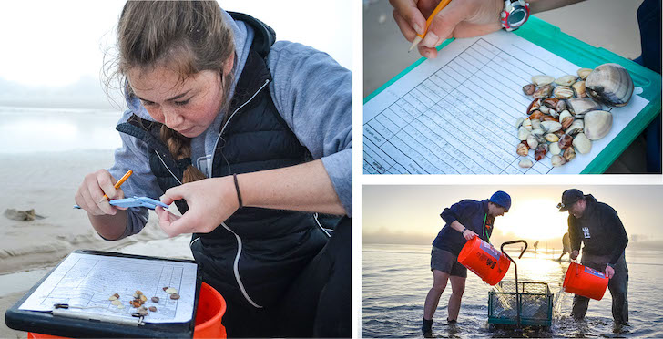 (clockwise from top left) 1. Marine science major Ellie Maietta measures a juvenile Pismo clam during a survey at Pismo Beach. 2. A data sheet recording the sizes and number of many small clams found during a survey at Pismo Beach. 3. Graduate student and project lead Alex Marquardt (left) and community volunteers sieve sand through a cart to reveal Pismo clams at dawn.
