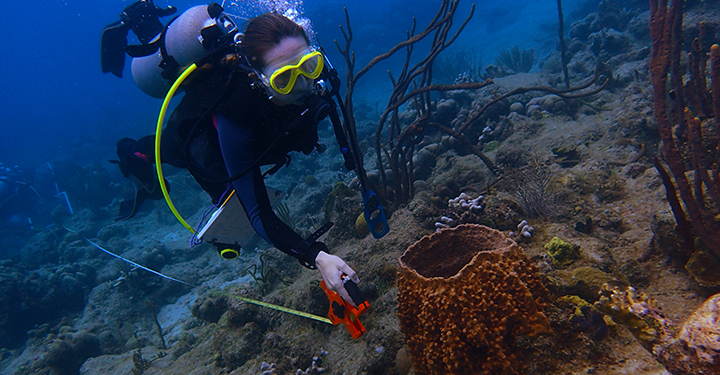 Madelyn Roycroft measuring distance on a coral reef