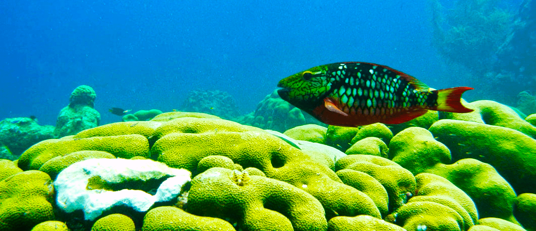 Image. Parrotfish.