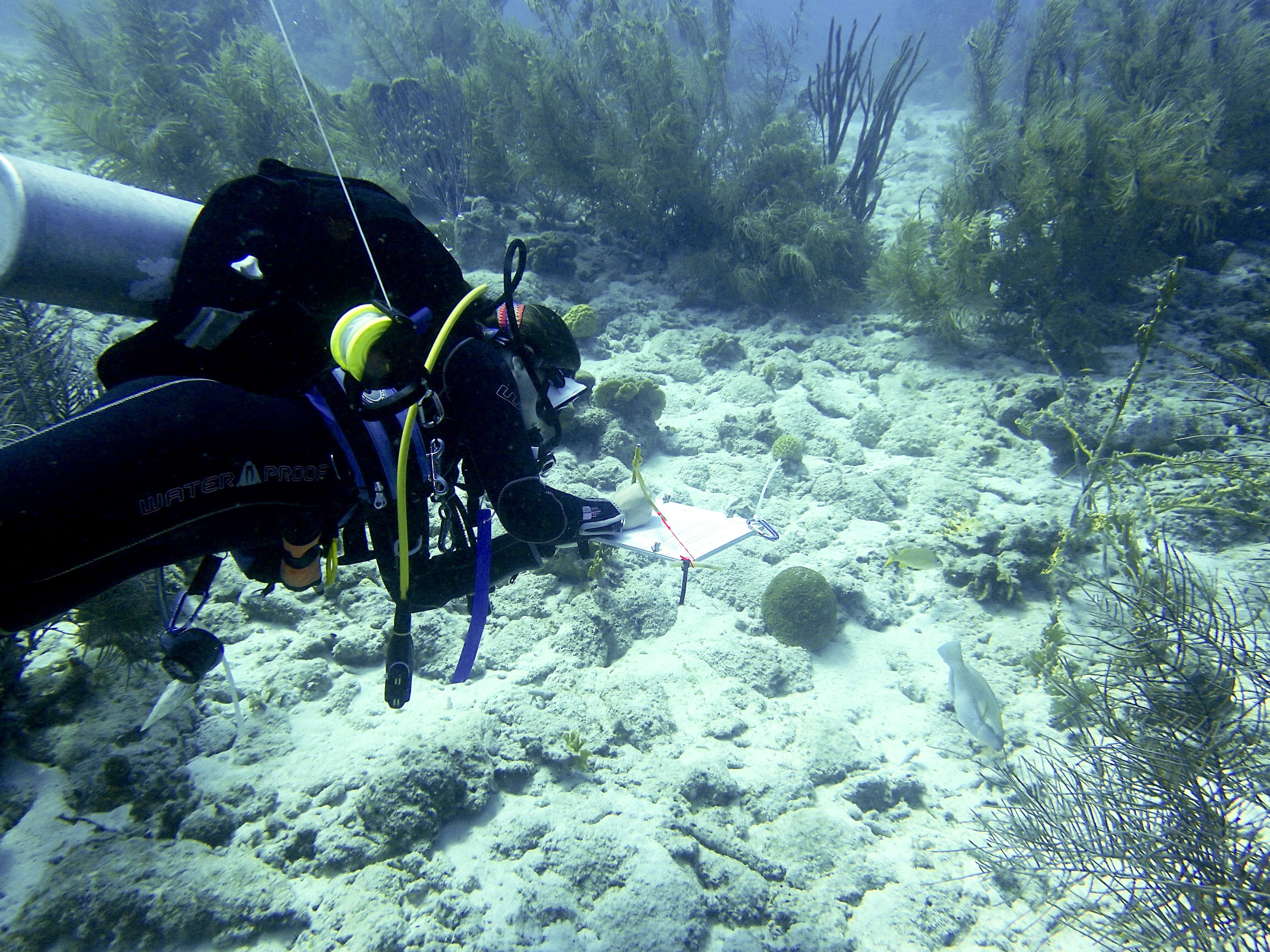 Image. A researcher in diving gear taking notes in an underwater setting.