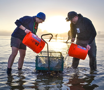 Students wading in the ocean pouring sea water from orange buckets into a mesh wagon at sunset
