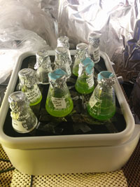 Algae bottles in bin