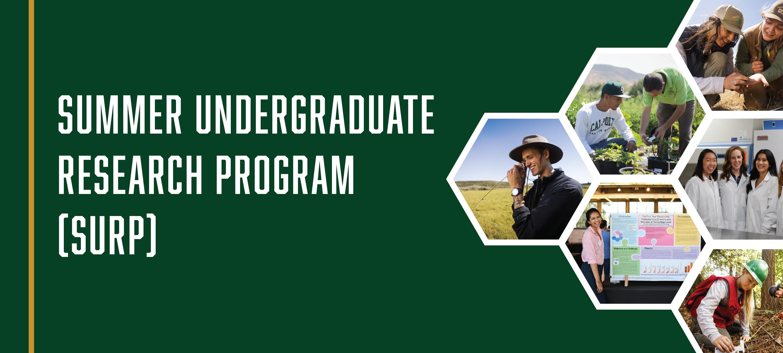 Summer Undergraduate Research Program (SURP)