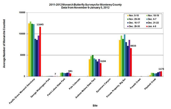Graph of average number of monarchs counted in Monterey County from 11/9 to 1/5/2012. Highest average found in Pacific Grove Monarch Sanctuary, second highest on private property, Big Sur.