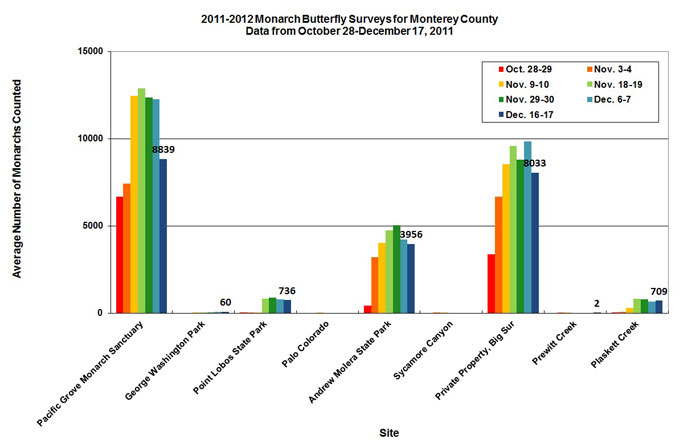Graph of average number of monarchs counted in Monterey County from 10/28 to 12/17/2011. Highest average in Pacific Grove Monarch Sanctuary, second highest in private property, Big Sur.