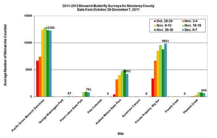 Graph of average number of monarchs counted in Monterey County from 10/28 to 12/7/2011. Highest average in Pacific Grove Monarch Sanctuary, second highest in private property, Big Sur.