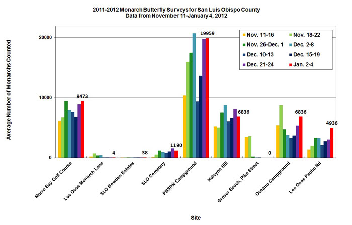 Graph of average number of monarchs counted in San Luis Obispo County from 11/11 to 1/4/2012. Highest average in PBSPN Campground, second highest in Morro Bay Golf Course.