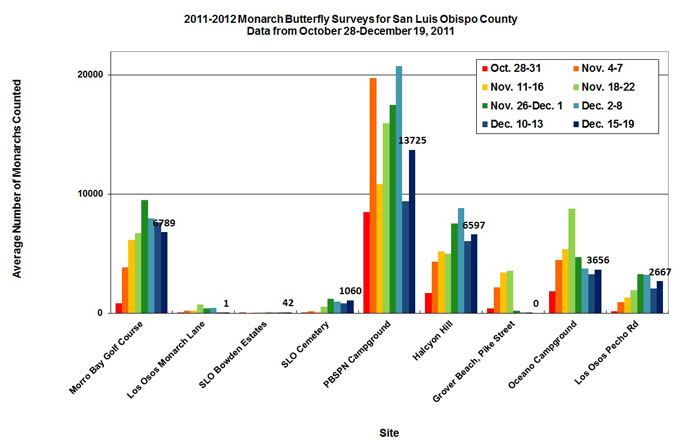 Graph of average number of monarchs counted in San Luis Obispo County from 10/28 to 12/19/2011. Highest average in PBSPN Campground, second highest in Morro Bay Golf Course.