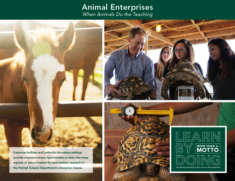 Animal Centered Enterprises thumbnail