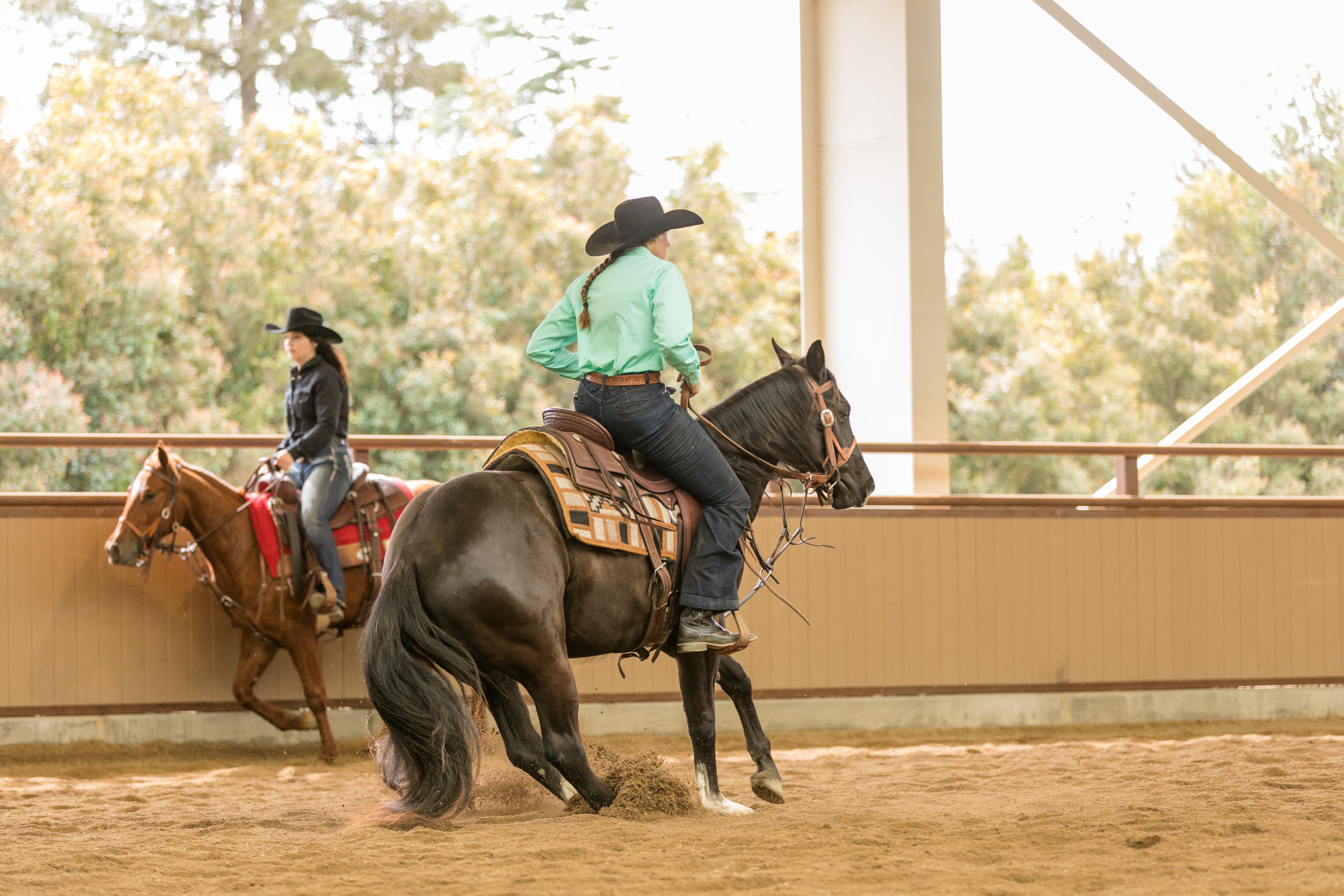 Lyle Wild Card Performance Horse Sales Cal Poly San