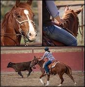 Horses Videos