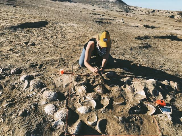 Channel Islands Excavation