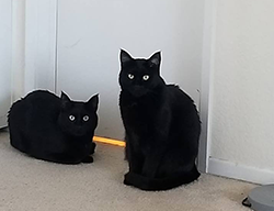 Two black cats in front of a white door