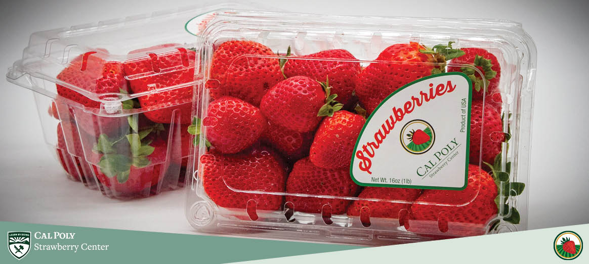 Clamshell of strawberries produced from the Cal Poly Strawberry Center
