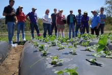 Louisiana State University Students in the Cal Poly Strawberry field