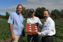 Dr. Holmes, Ryan Brantley and Katcho Achadjian in the Strawberry Center's field