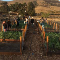 Agroecology Learning Garden